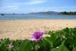 Sự tích hoa Muống biển