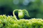 Video: Chân lý cuộc đời – Hạt giống tâm hồn