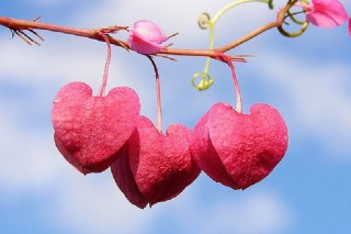 Tình yêu diệu kỳ