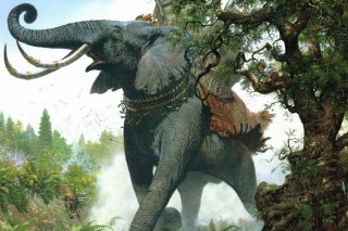 Con voi với người quản tượng già