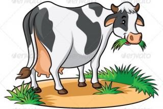 Mất trộm bò