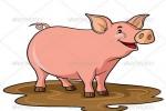 Vì sao mũi lợn lại ngắn?