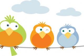 Dơi, chim và họ nhà thú