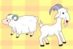 Cừu non và cá con